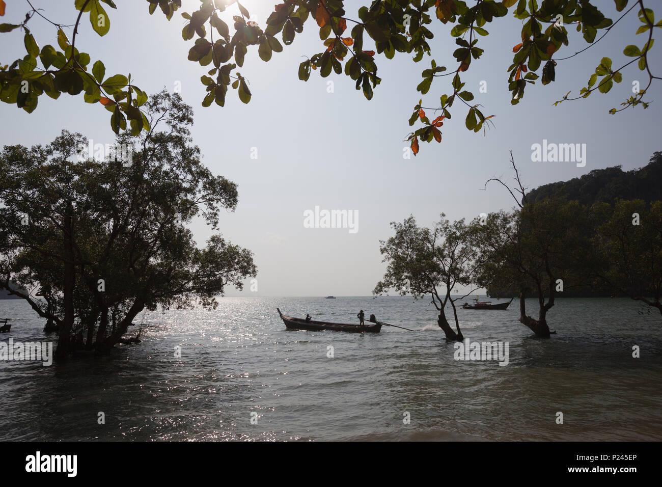 Coast with mangroves. Twilight. Krabi. Thailand - Stock Image