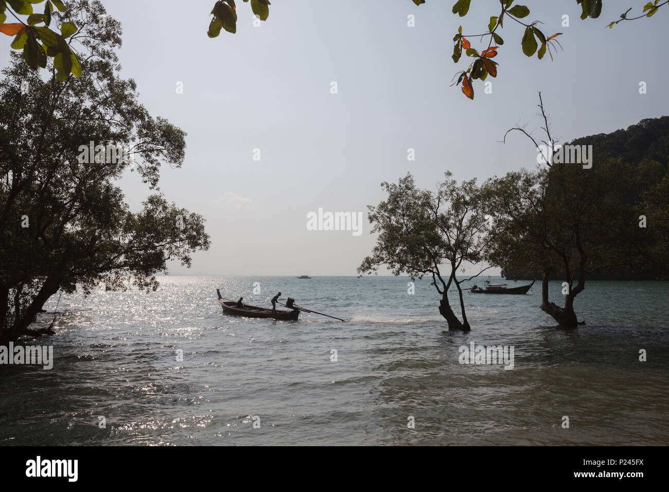 Evening landscape with mangroves. Province of Krabi. Thailand - Stock Image