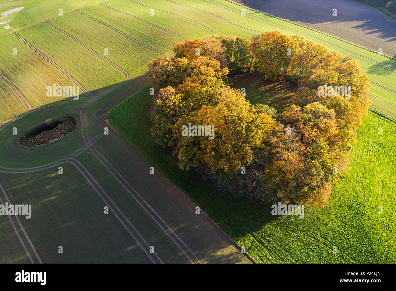 thing / Alping in Neuhorst in the Oldenburger Wall - Stock Image