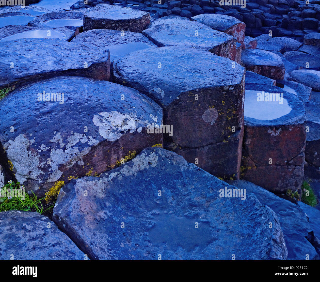 Northern Ireland, Antrim, Causeway Coast, basalt rock of Giants Causeway in evening mood, blue hour, UNESCO world nature heir, - Stock Image