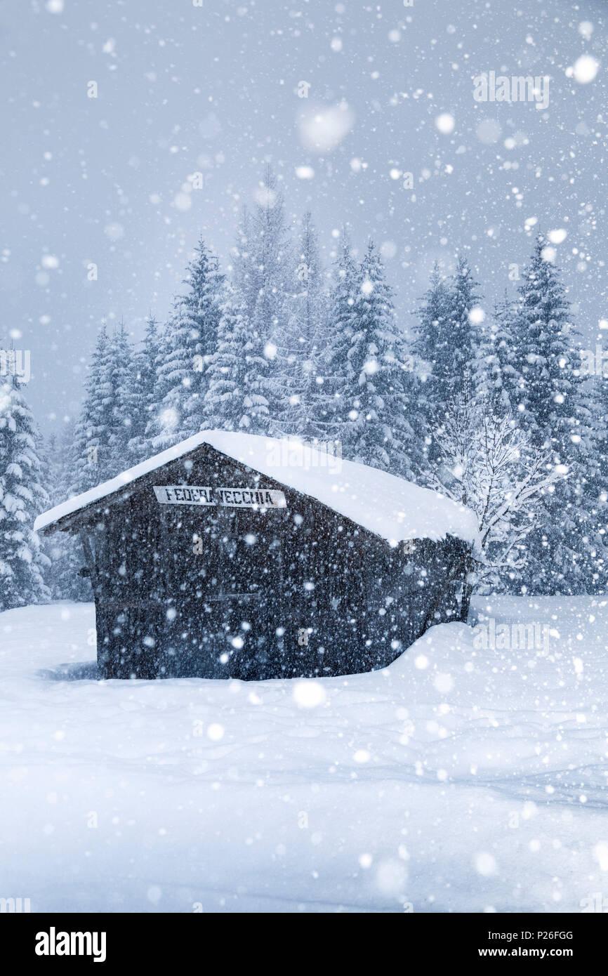 Old mountain barn under a copious snowfall, Ansiei valley, Auronzo di Cadore, Dolomites, Belluno, Veneto, Italy Stock Photo