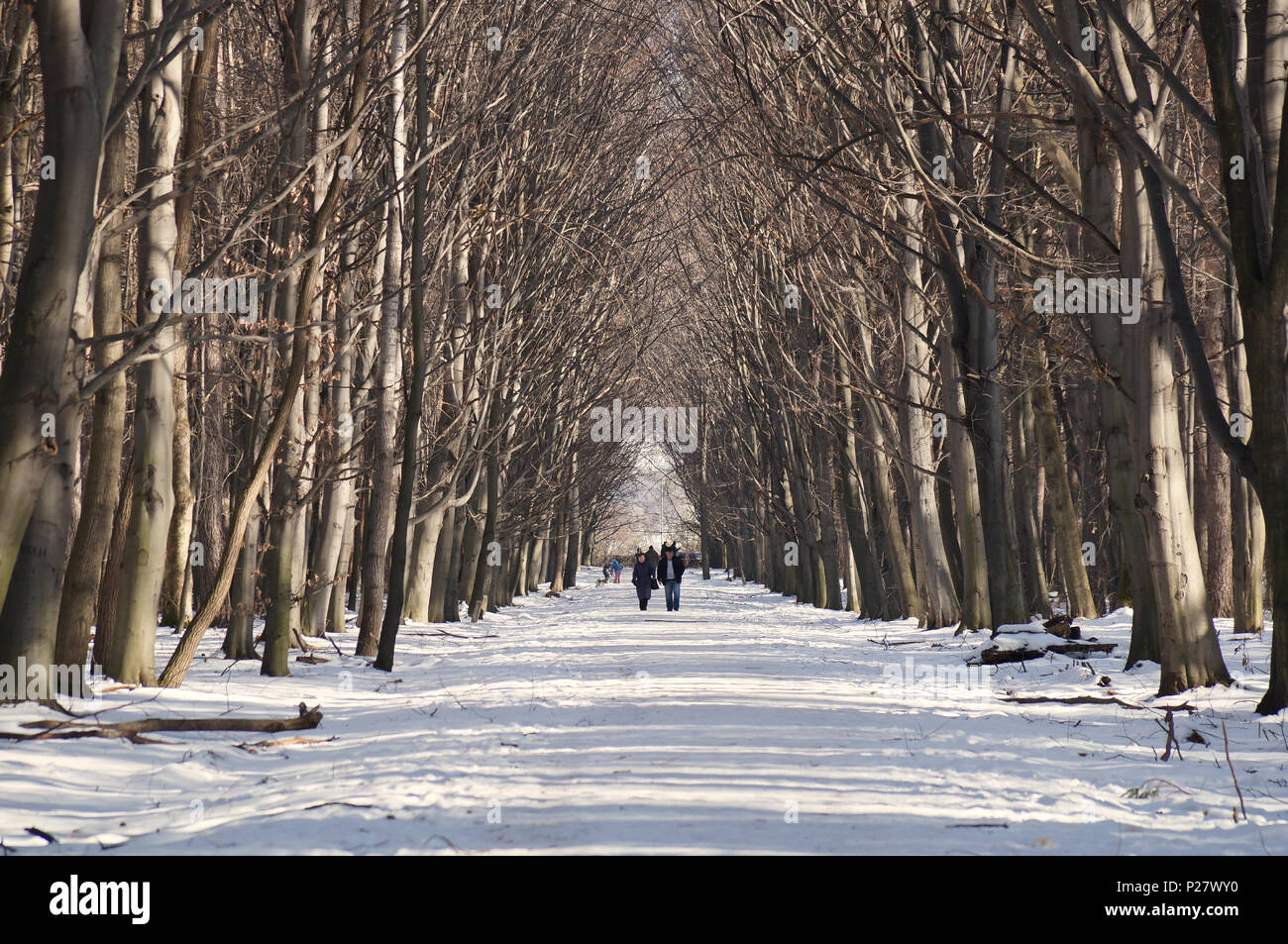 Snowy way. City-dwellers in Dendrarium park, Vladikavkaz, North Ossetia-Alania, Russia. 2014-01-07 - Stock Image
