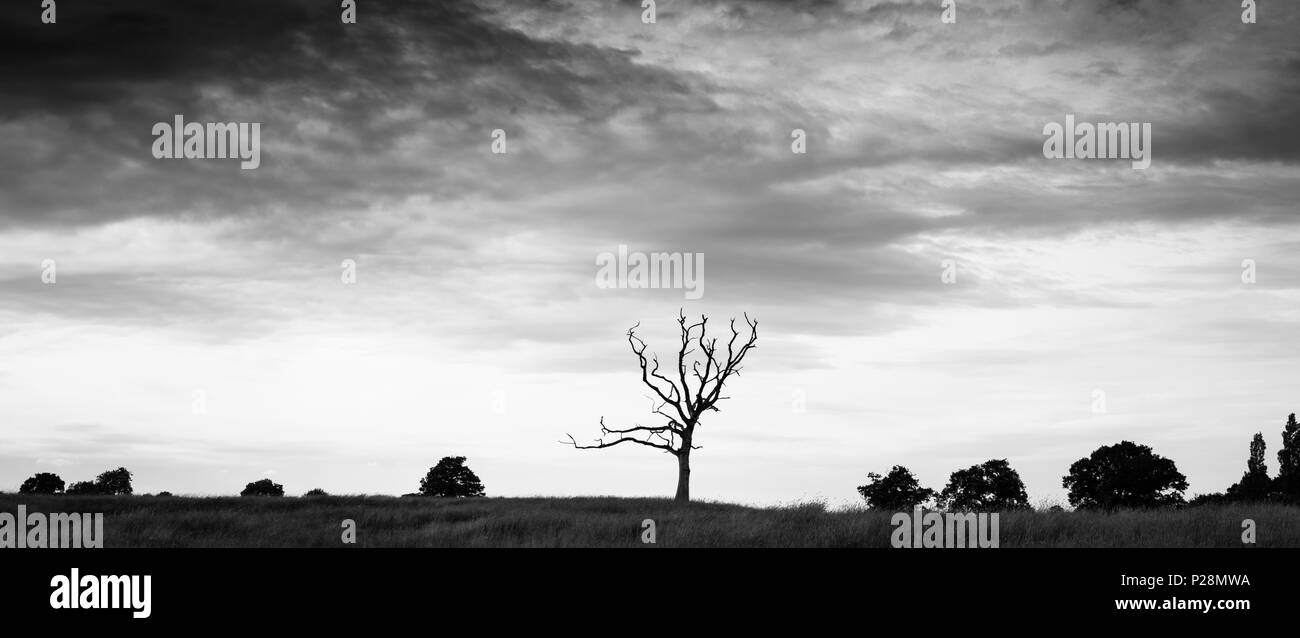 The Deadwood Tree - Stock Image