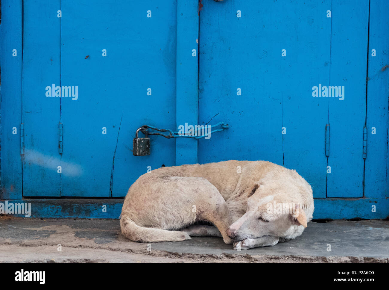 Sleeping dog in front of blue painted doors - Stock Image