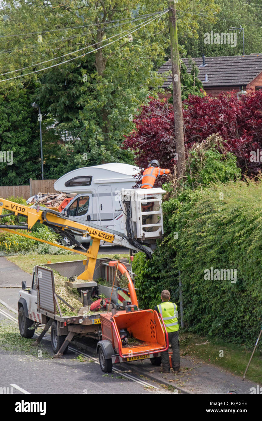 14th June 2018. Alvechurch, Worcestershire, England, UK. Contractors  clearing Ivy and hedgerow from around a telegraph pole at the hight of the bird nesting season - Stock Image
