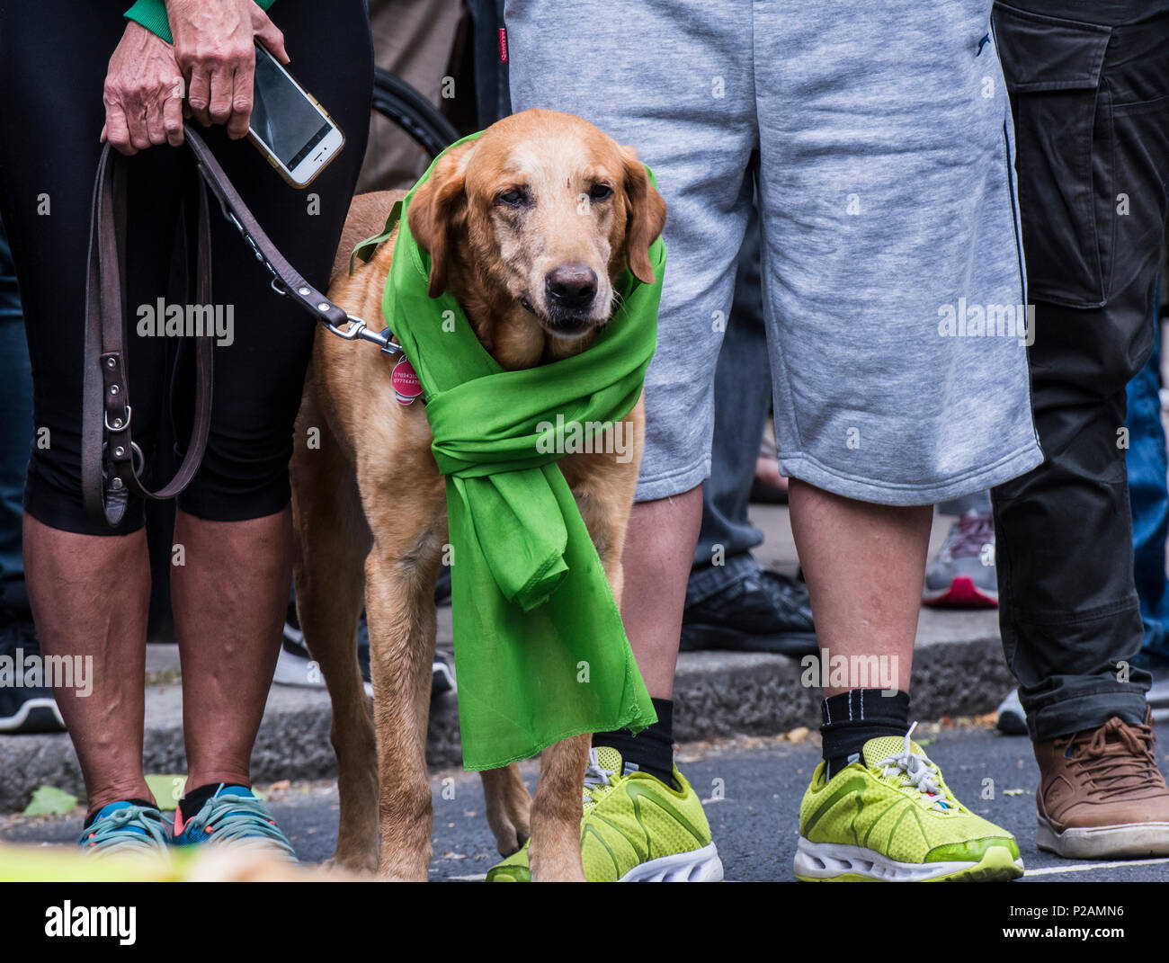 Dog standing with his owner, wearing the green scarf to mark the anniversary of the Grenfell fire, London, England, UK, 14th June 2018 Stock Photo