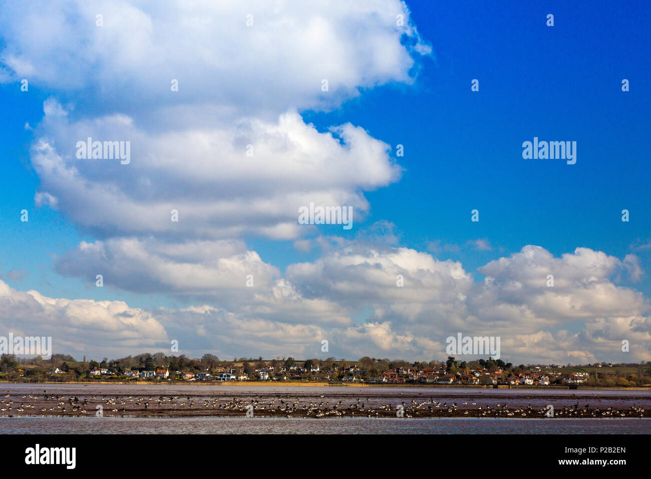 An assortment of wading birds on the mudflats of the River Exe with Exton beyond, Devon, England, UK - Stock Image