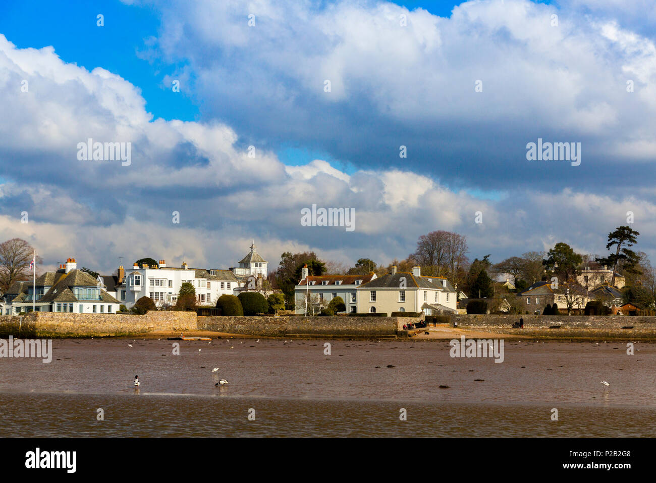Assorted waterfowl and ducks on the mudflats of the River Exe at Topsham, Devon, England, UK - Stock Image