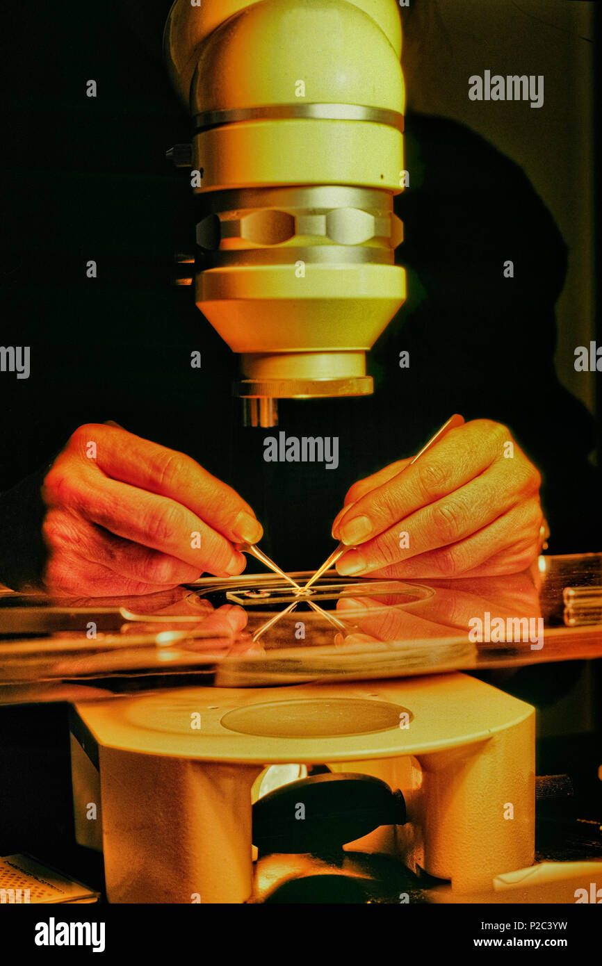 A Scientist Uses A Low Power Microscope To Examine Anatomy Of A