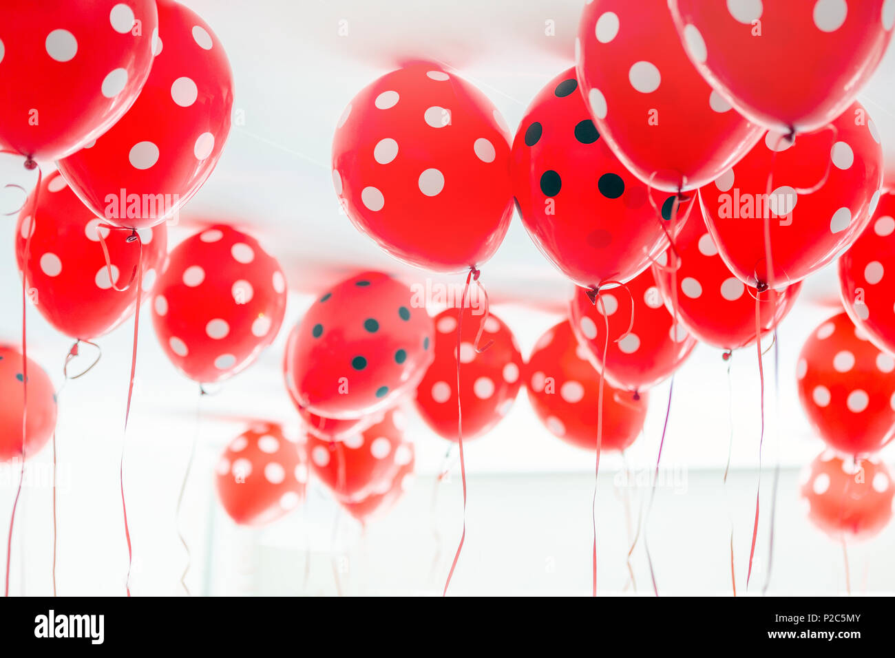 Beautiful red dotted balloons floating at white ceiling. Wedding or children birthday party decoration interior. - Stock Image