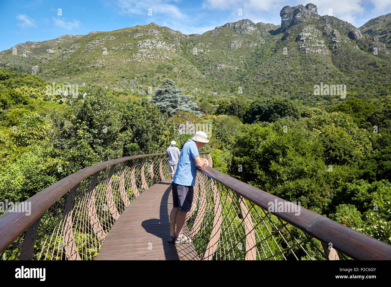 Boomslang tree canopy walkway in Kirstenbosch botanical Garden Cape Town SA - Stock Image