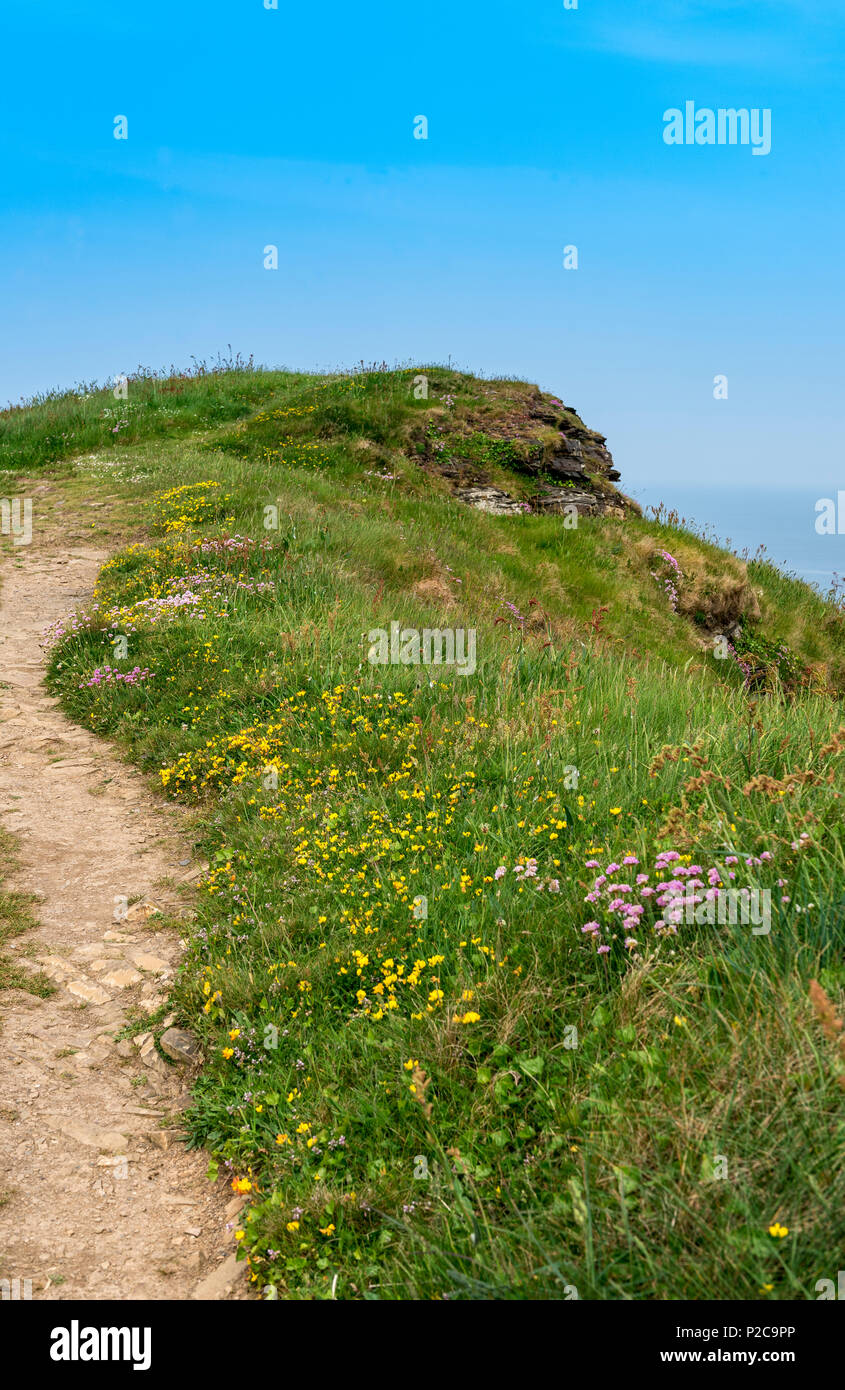 A section of the south west coast path at Crackington Haven north Cornwall - Stock Image