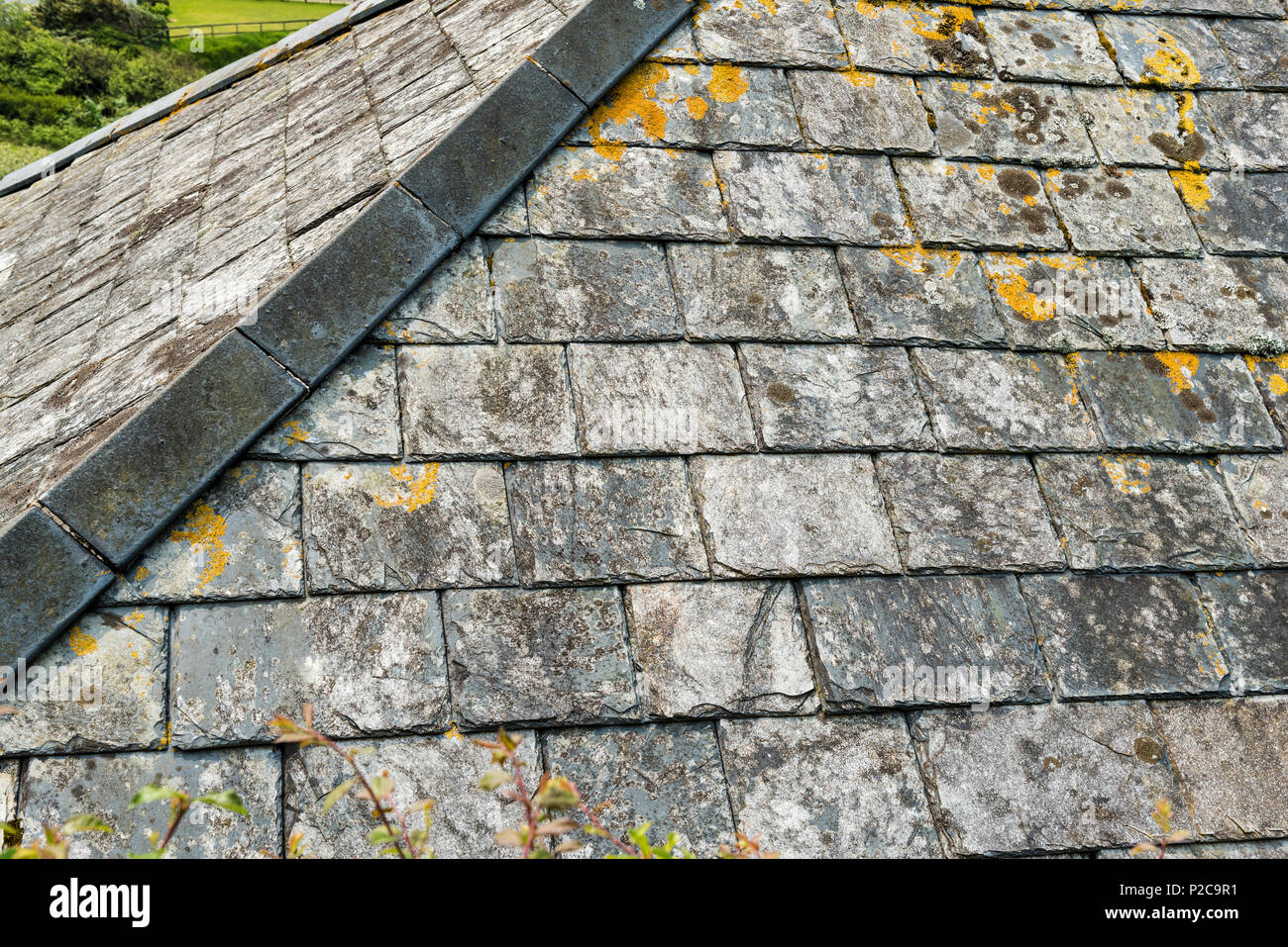 Close Up Section Of A Slate Hip Roof Old Roof In Cornwall Showing Growth Of Lichen And Moss Stock Photo Alamy