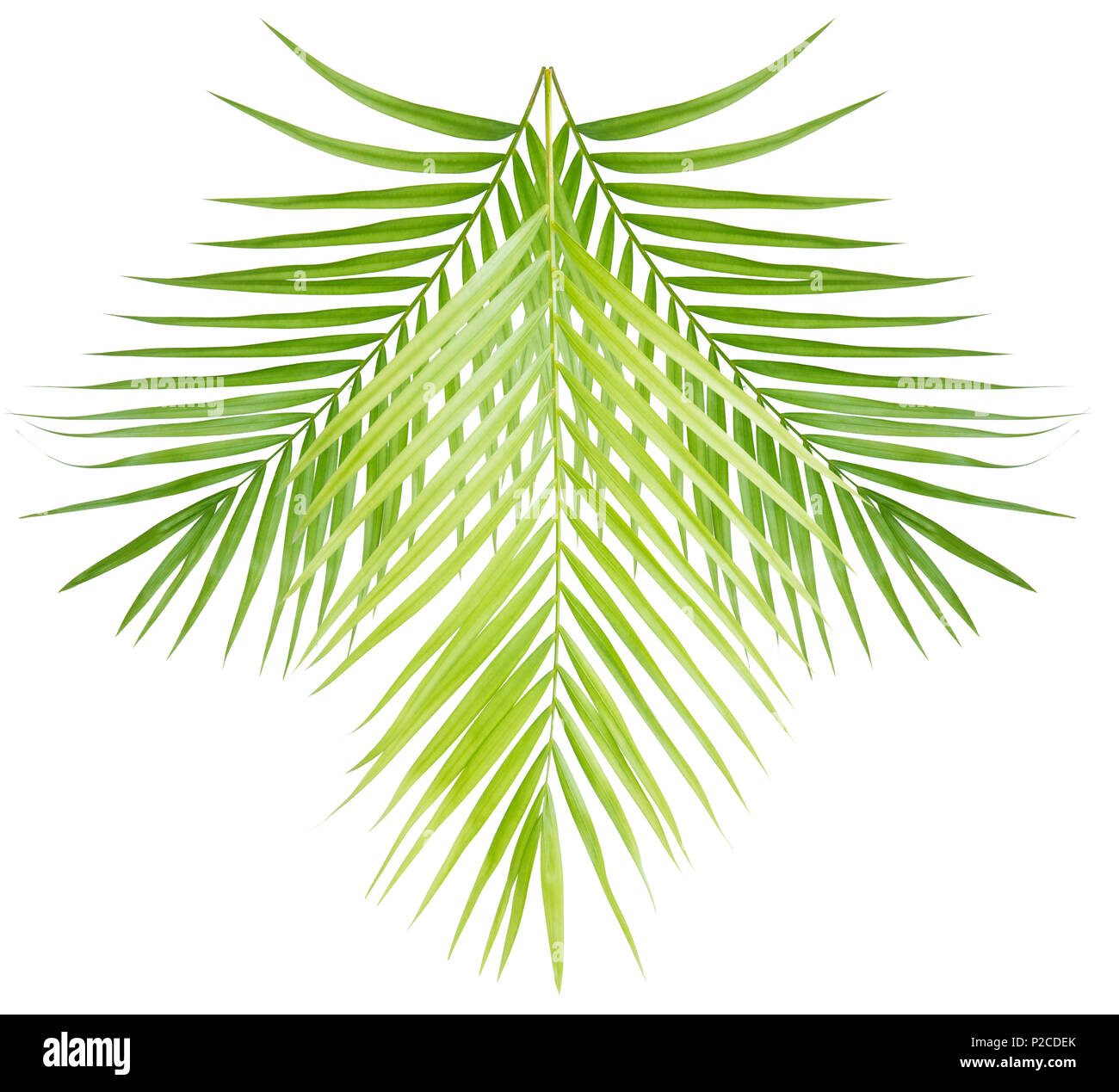 Green Palm Leaf Cut Out Stock Images Pictures Page 2 Alamy