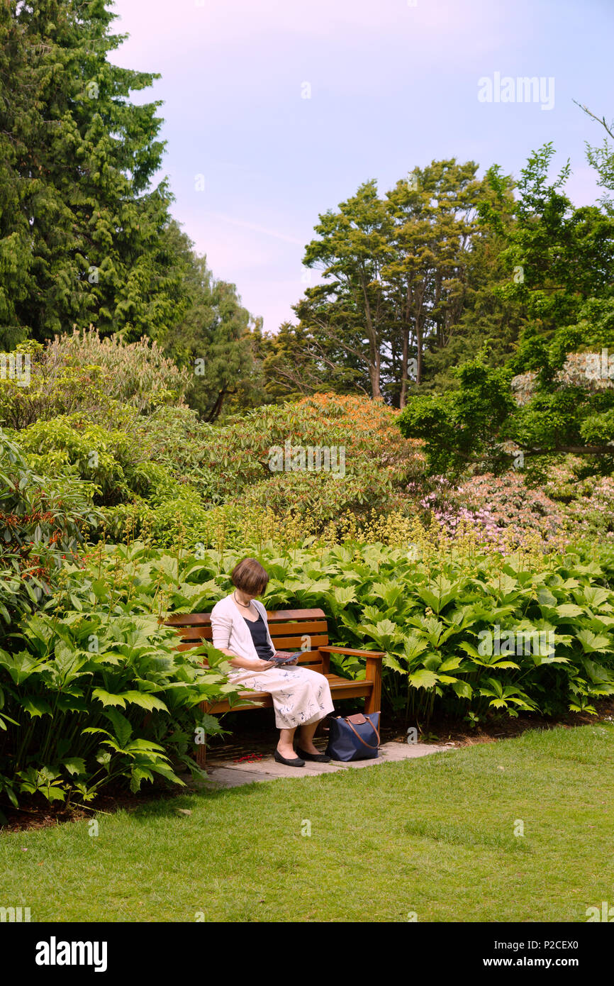 A middle aged woman sitting reading in a quiet  garden, Royal Botanic garden, Edinburgh, Scotland UK - Stock Image