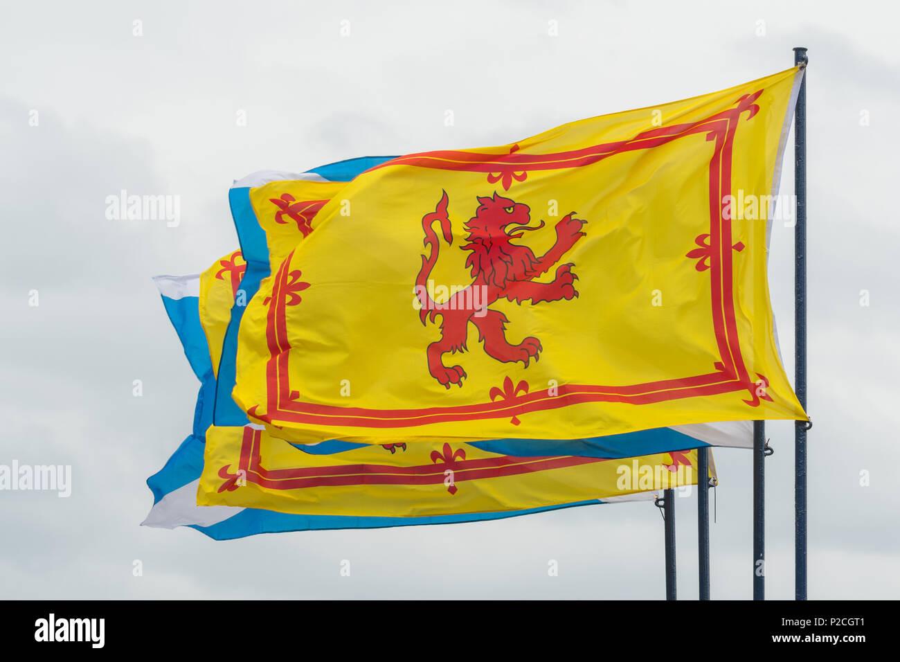 Scottish Flags - the Lion Rampant or Royal Banner of Scotland flying alongside the Scottish saltire - Stock Image