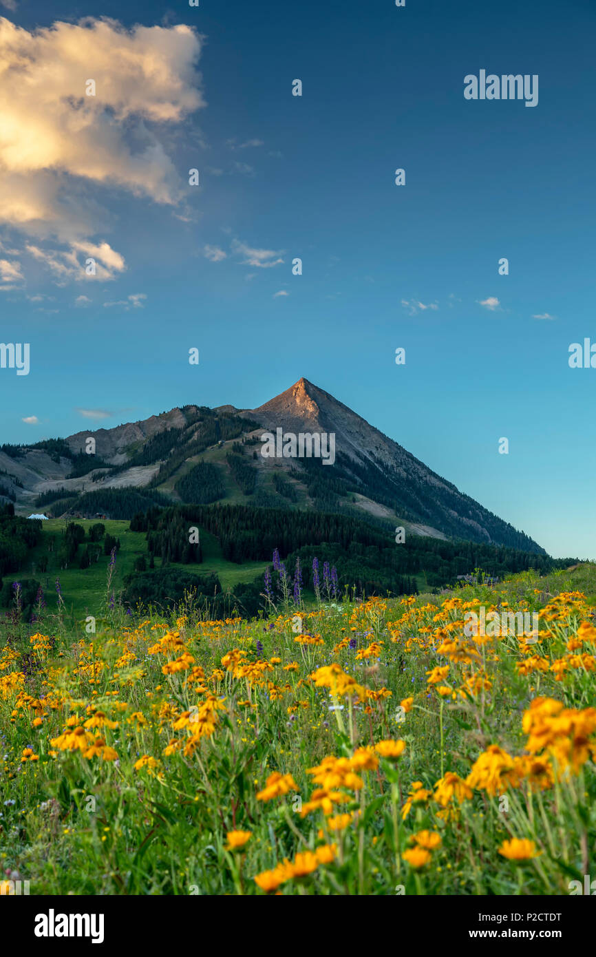 Wildflowers and Mt. Crested Butte (12,162 ft.), Gunnison National Forest, near Crested Butte, Colorado USA Stock Photo