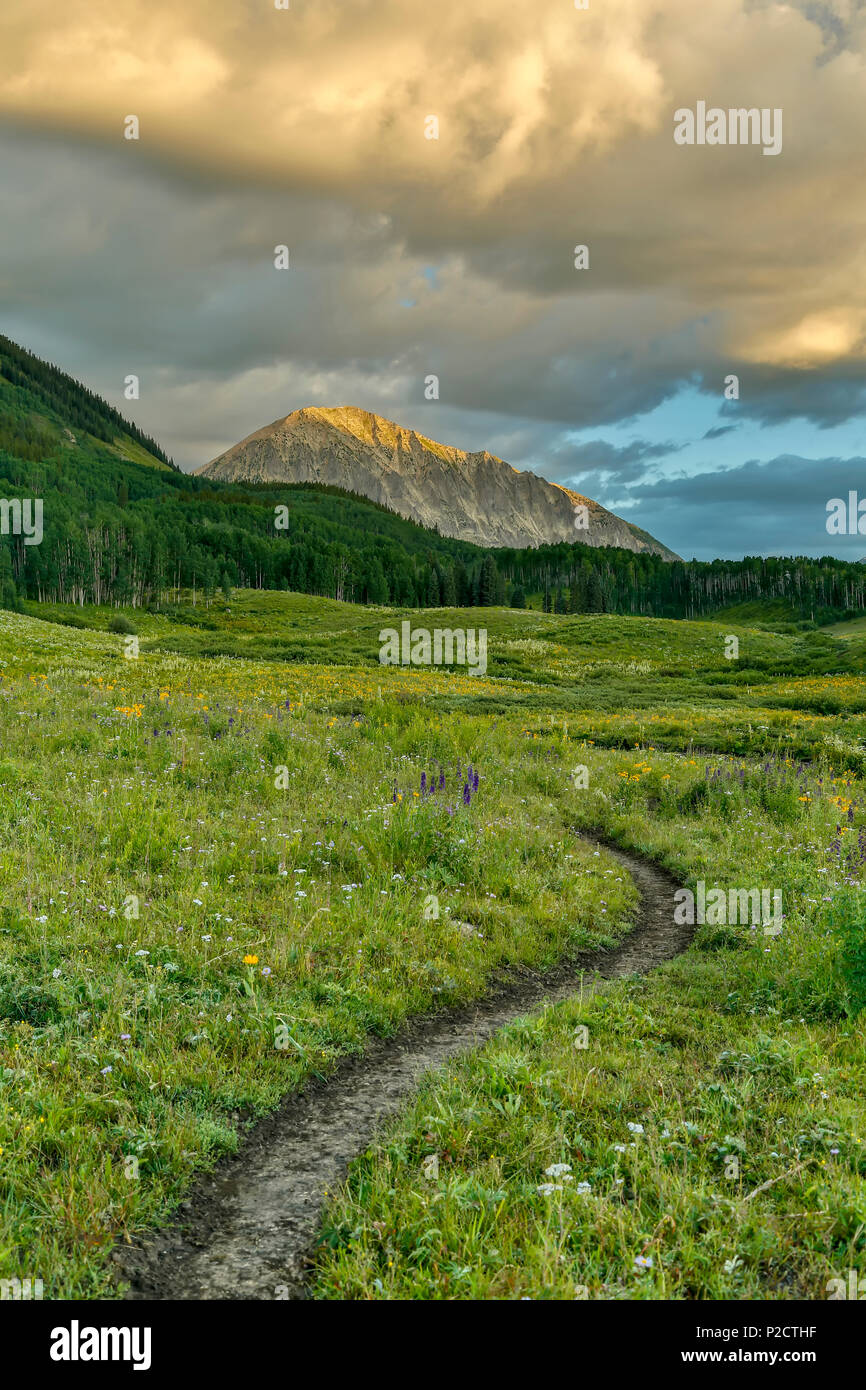Hiking trail and Gothic Mountain (12,631 ft.), Gunnison National Forest, near Crested Butte, Colorado USA - Stock Image