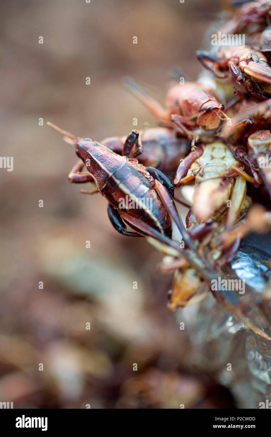 Mexico Grasshoppers Market Stock Photos & Mexico Grasshoppers Market