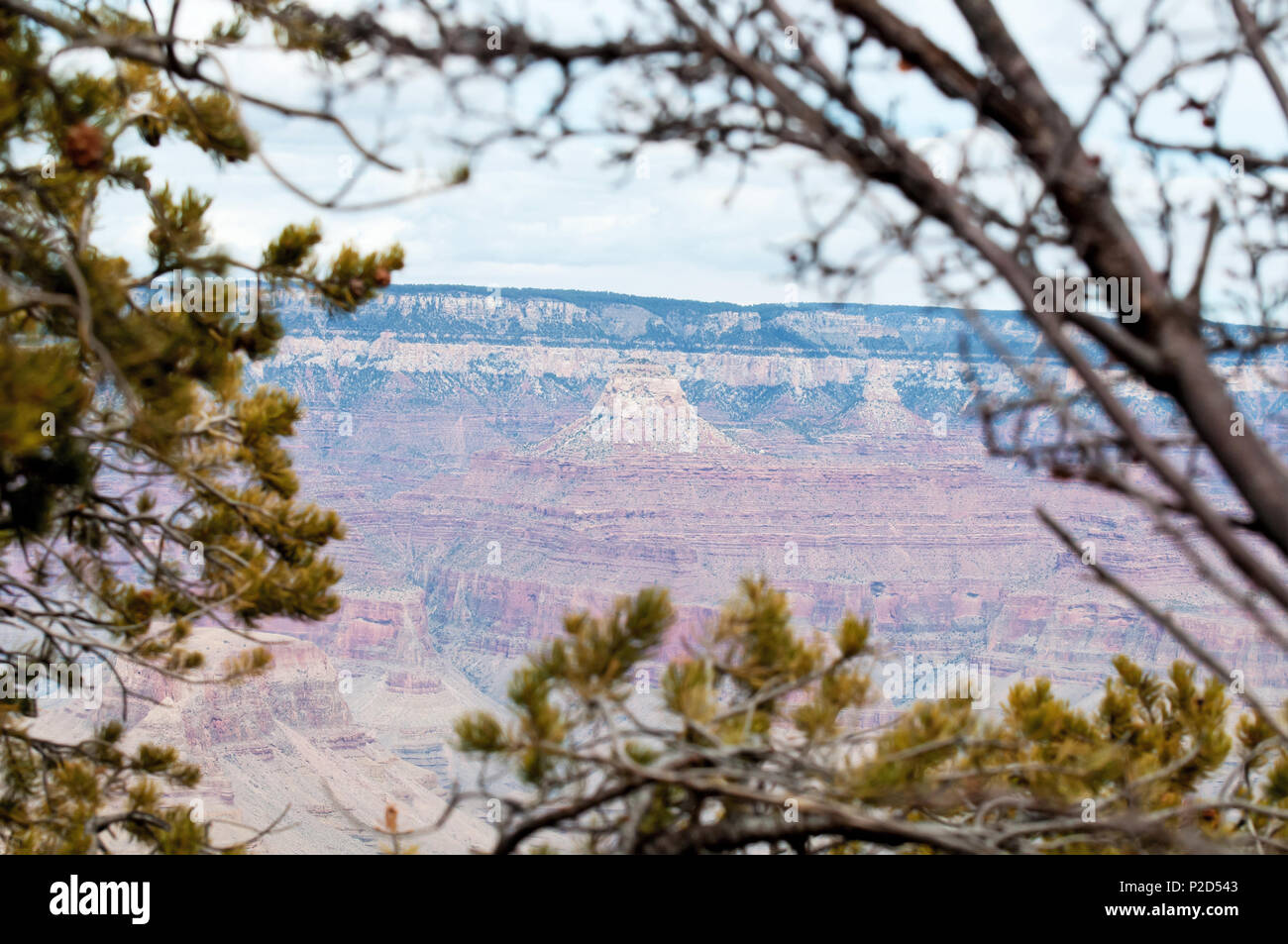 Looking at the grand canyon through trees and shrubbery. - Stock Image