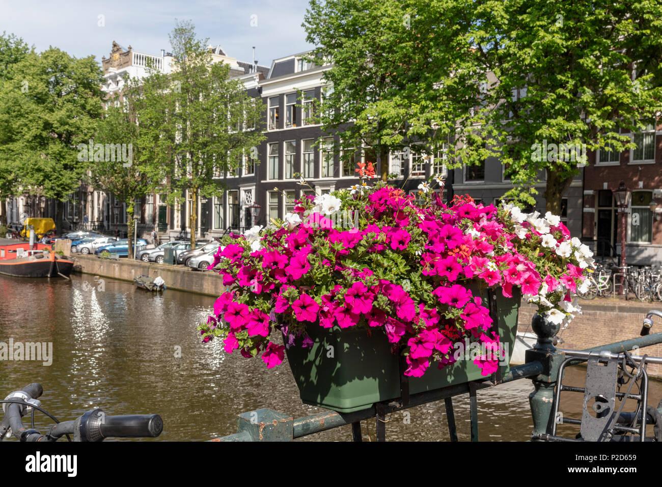 Flower box on Herenstraat bridge over Keizersgracht Stock Photo