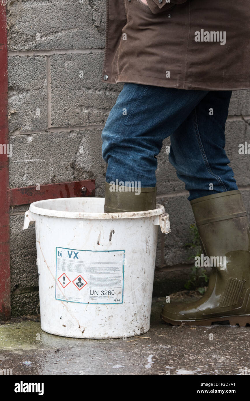 People dipping their boots in a disinfection at a poultry unit as part of Bio-Security Lancashire, UK. - Stock Image