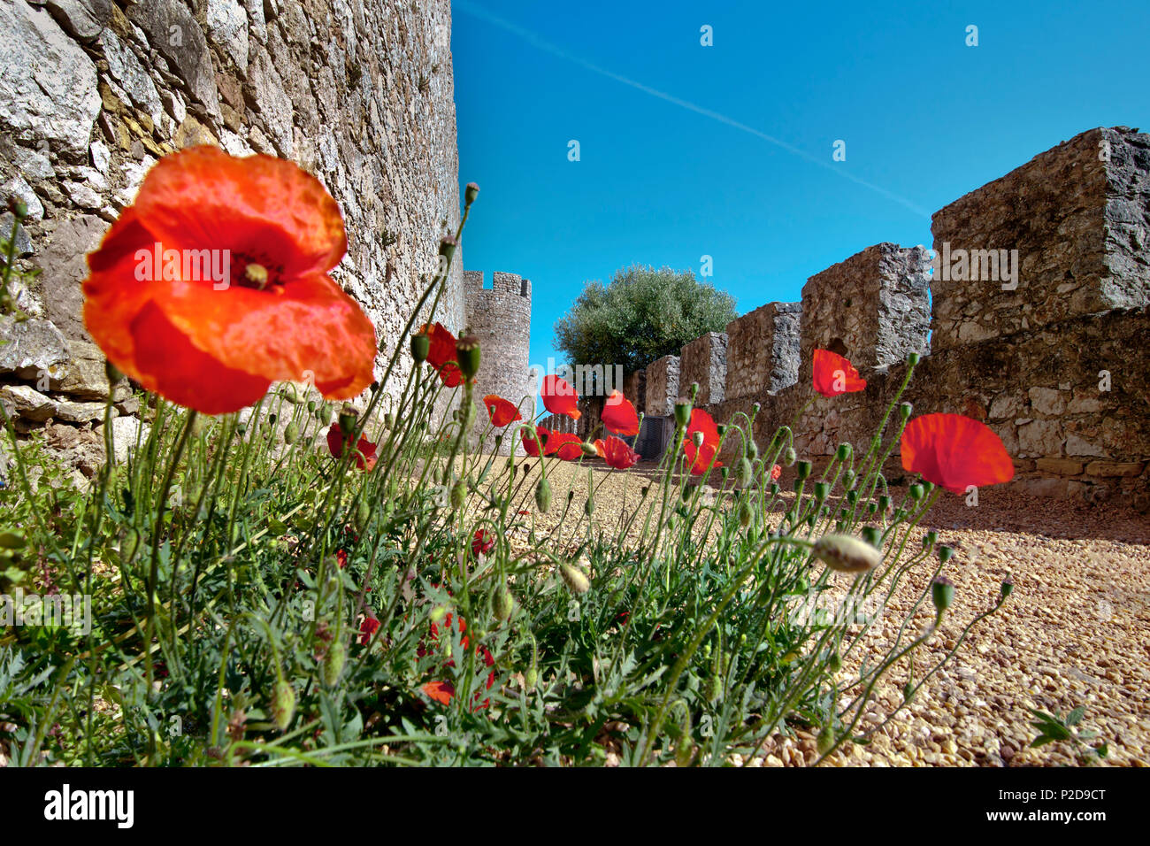 Poppy flowers at the castle, Santiago do Cacem, Costa Vicentina, Alentejo, Portugal - Stock Image