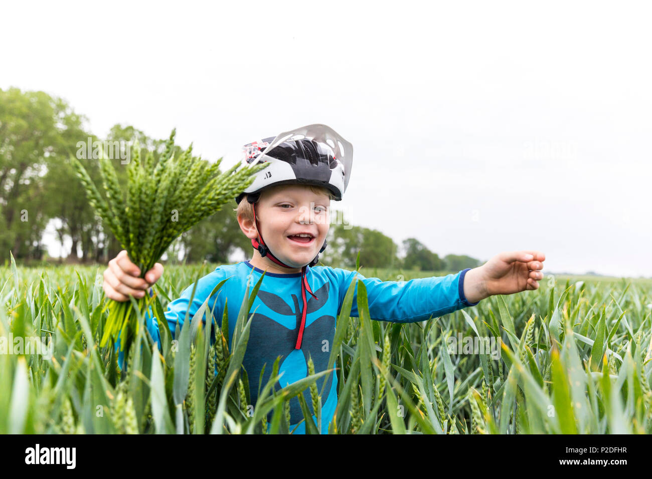 Boy in a cornfield, Family bicycle tour along the river Elbe, adventure, from Torgau to Riesa, Saxony, Germany, Europe Stock Photo