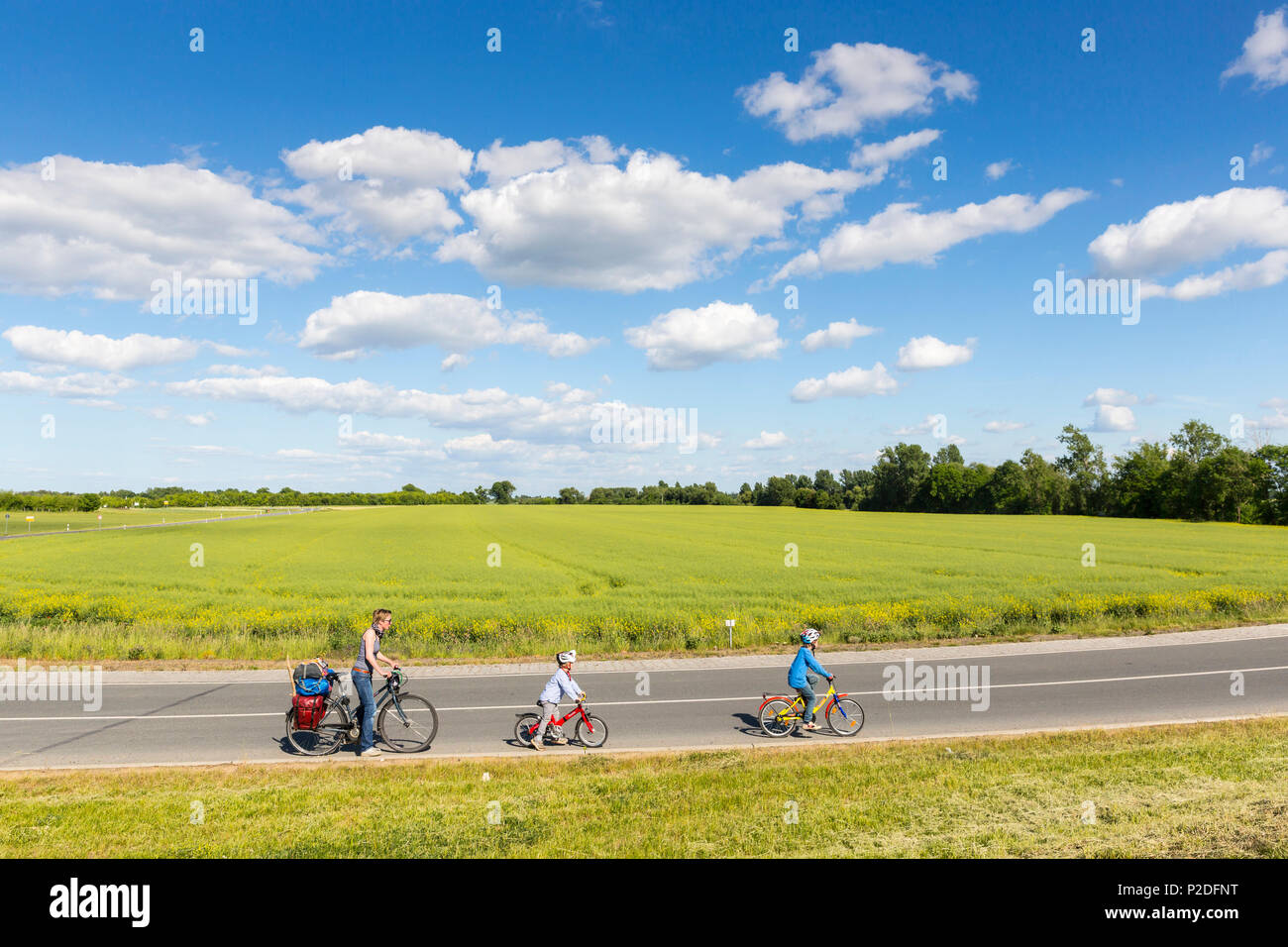 Family bicycle tour along the river Elbe, adventure, from Torgau to Riesa, Saxony, Germany, Europe Stock Photo