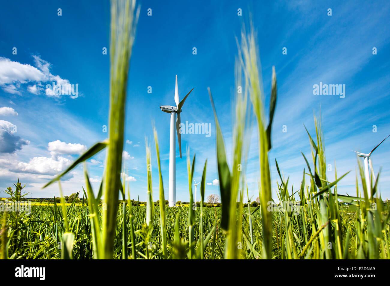 Wind turbine in a field, Baltic Coast, Schleswig-Holstein, Germany - Stock Image
