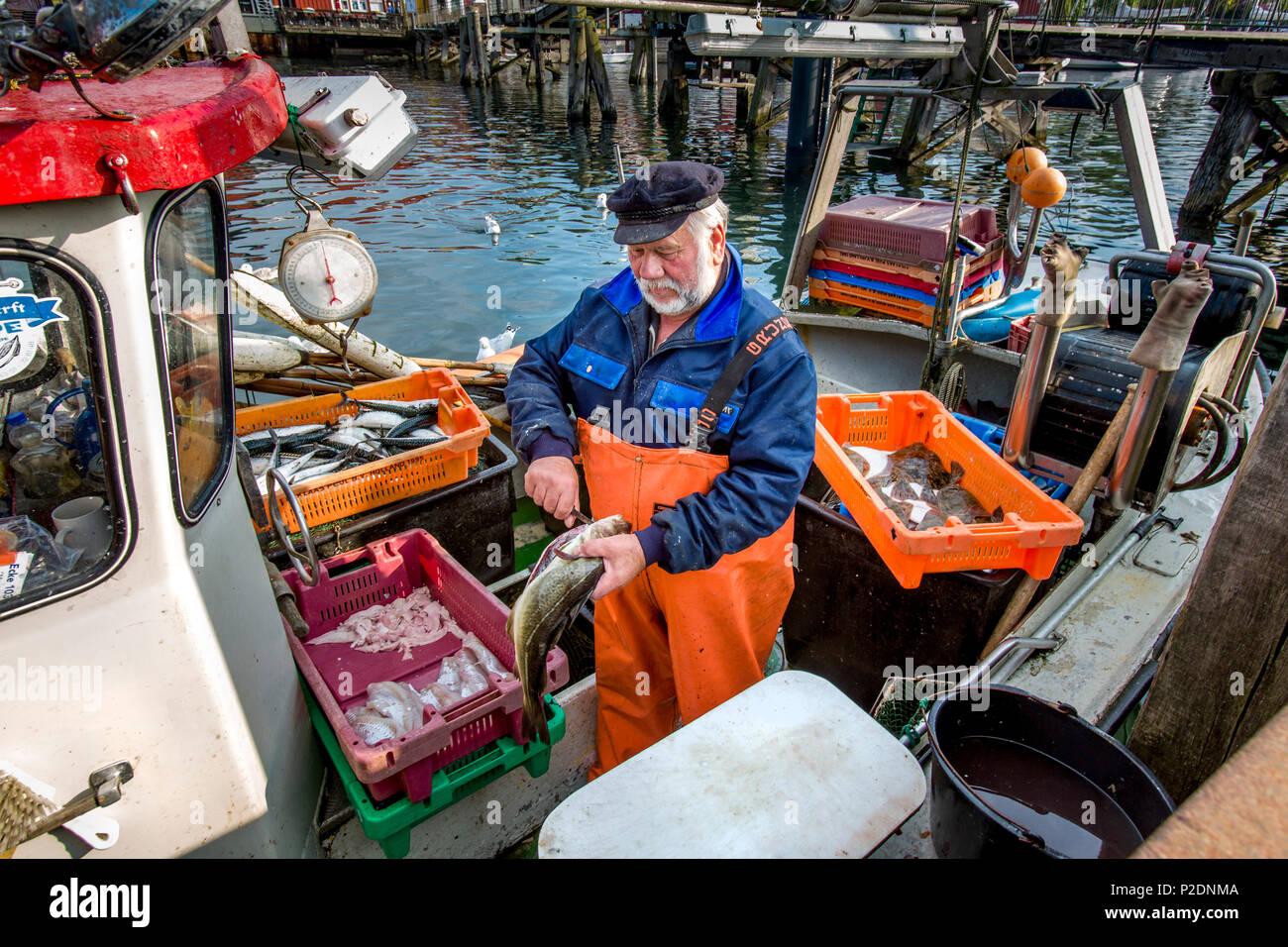 Fisherman selling fish from boat, Eckernfoerde, Baltic Coast, Rendsburg-Eckernfoerde, Schleswig-Holstein, Germany - Stock Image