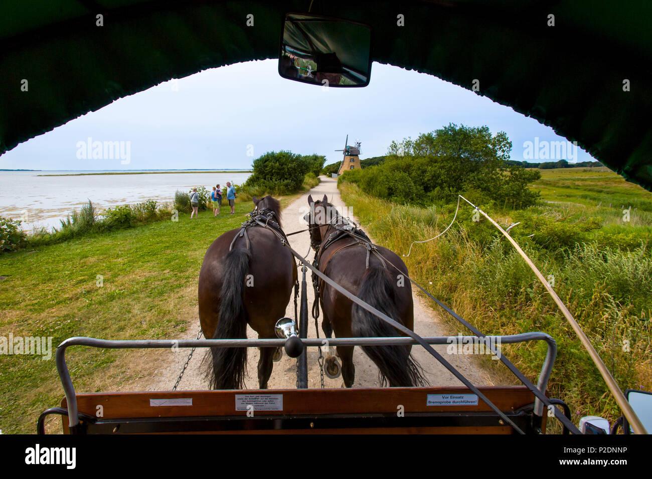 Horse carriage ride through the Geltinger Birk, Baltic Coast, Schleswig-Holstein, Germany - Stock Image