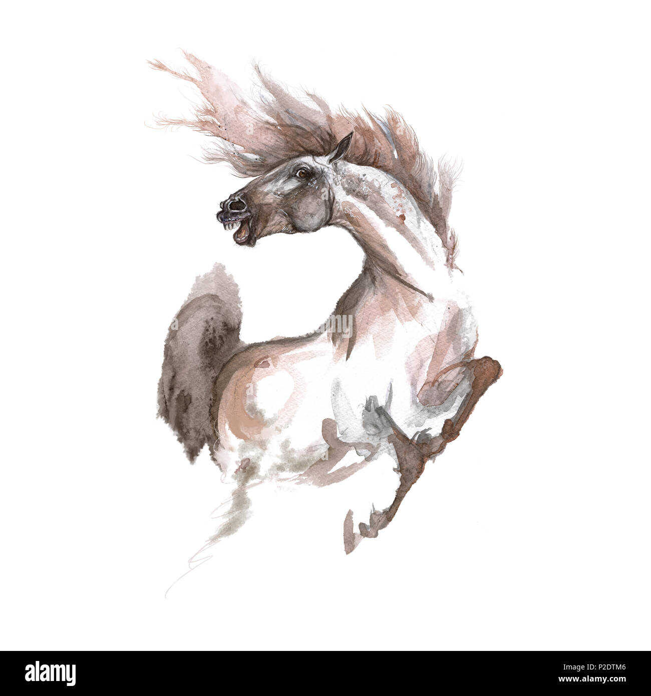 Horse Tattoo High Resolution Stock Photography And Images Alamy