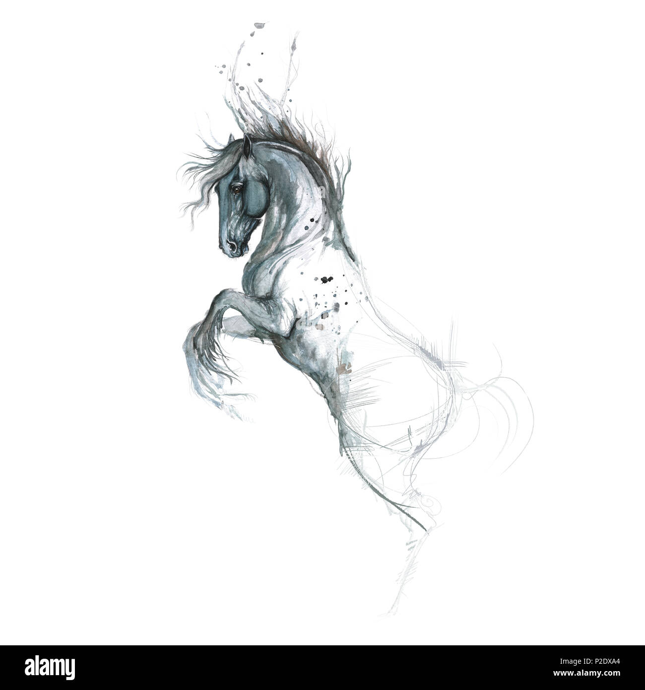 Painting Of Horse High Resolution Stock Photography And Images Alamy