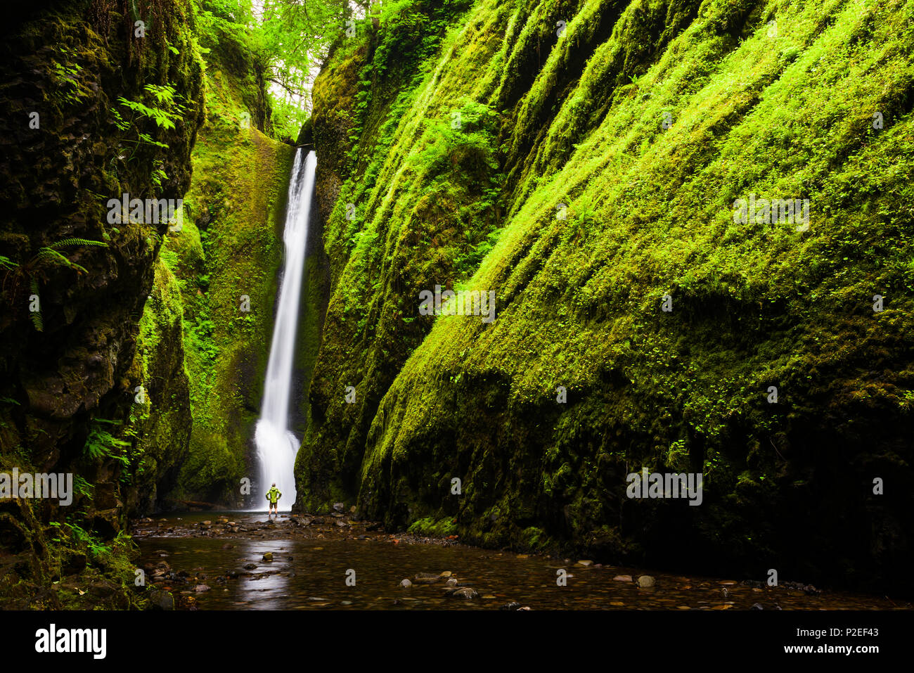A hiker stands under Lower Oneonta Falls in the Columbia River Gorge in Oregon. This is one of the most spectacular short waterfall hikes around. - Stock Image