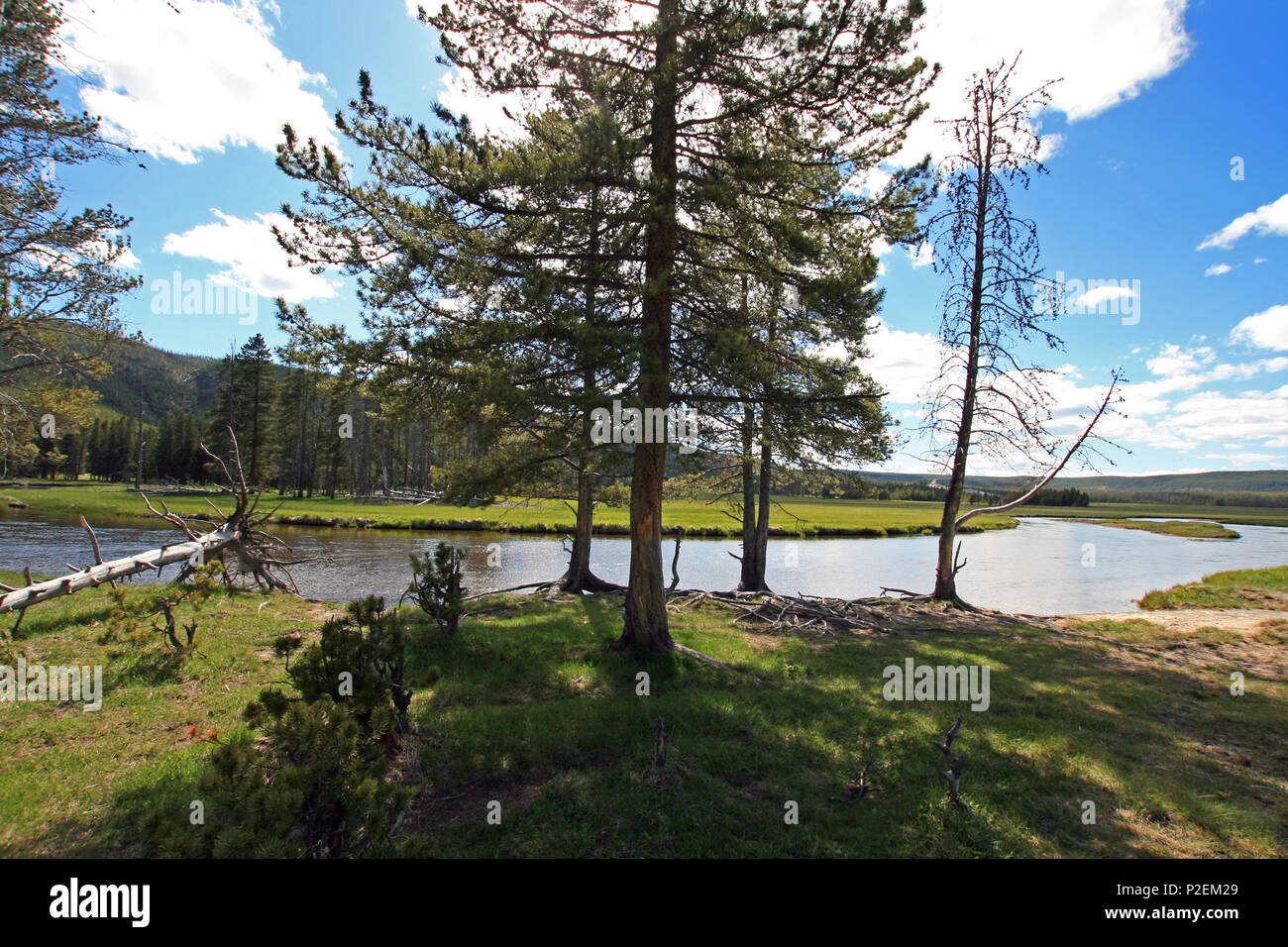 Gibbon River flowing through Gibbon Meadows in Yellowstone National Park in Wyoming United States - Stock Image