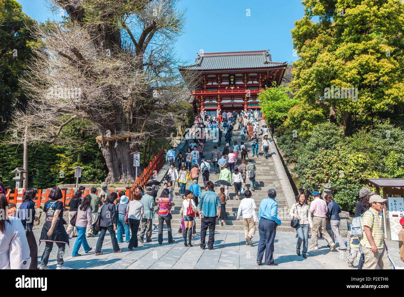 Stairs in front of Hachimangu Shrine in Kamakura, Kanagawa Prefecture, Japan - Stock Image
