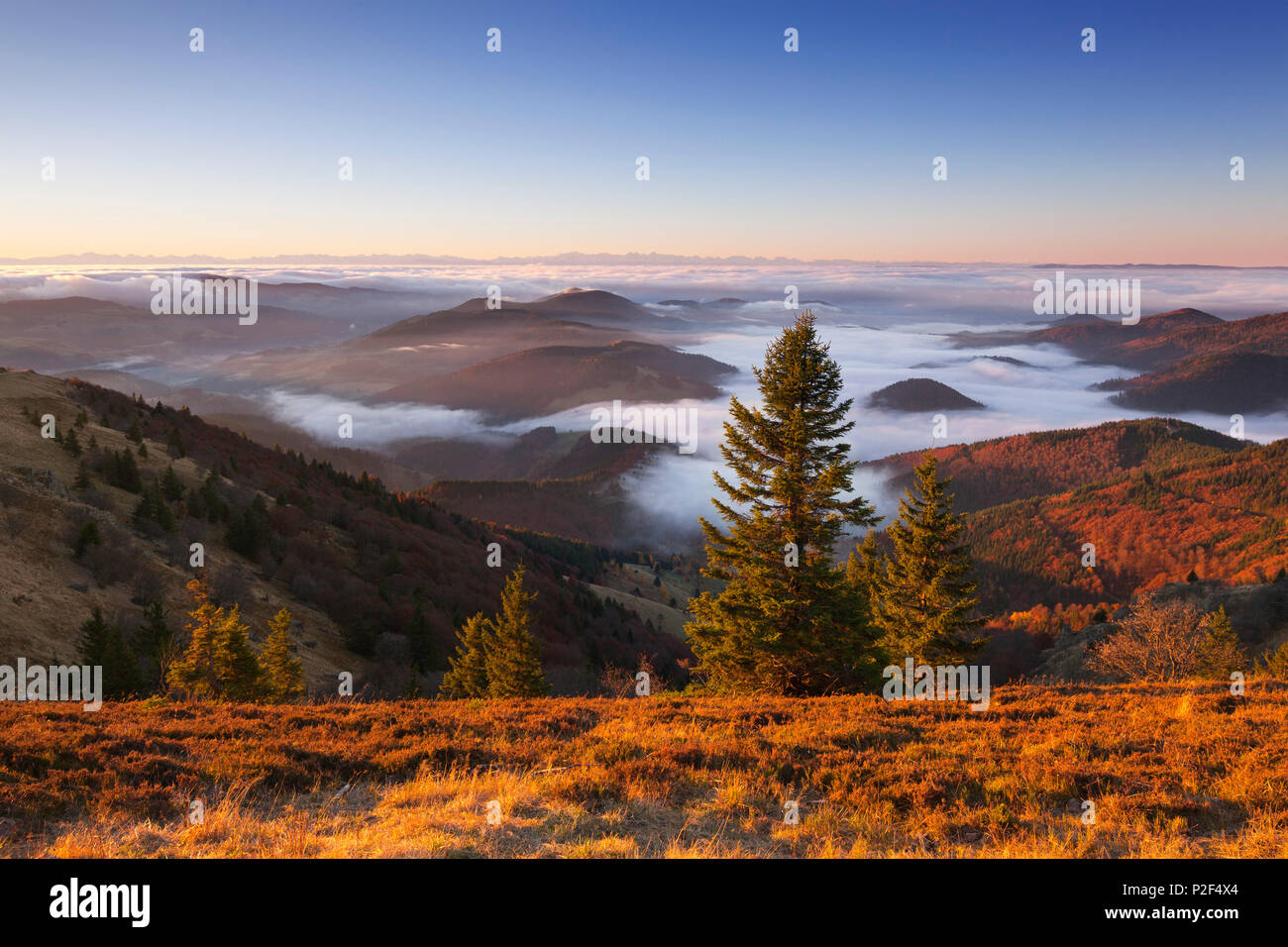 View from Belchen over the fog towards the Alps, Black Forest, Baden-Wuerttemberg, Germany - Stock Image