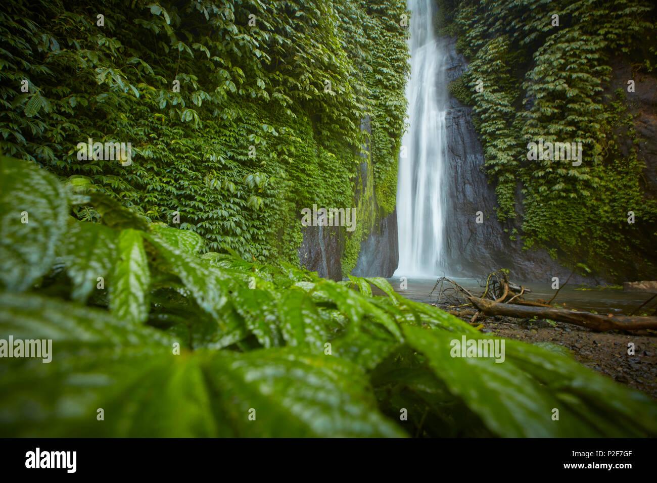 MUNUK waterfall, near Gobleg, north Bali, Indonesia - Stock Image