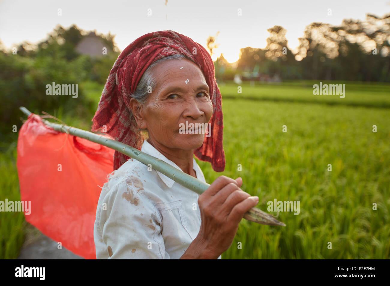 Rice paddies, rice field Penestanan, Ubud, Bali, Indonesia - Stock Image