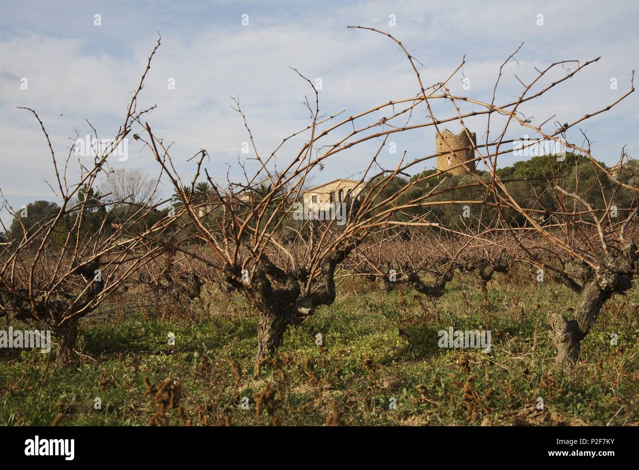 SPAIN - Catalonia - Baix Empordá (district) - GERONA. Palafrugell; masia fortificada y viñedos junto al camino a Calella. - Stock Image