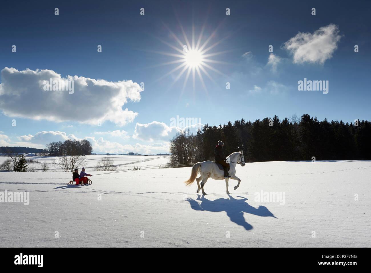 Mother on horse pulling children on sledge, Buchensee, Muensing, Bavaria Germany - Stock Image