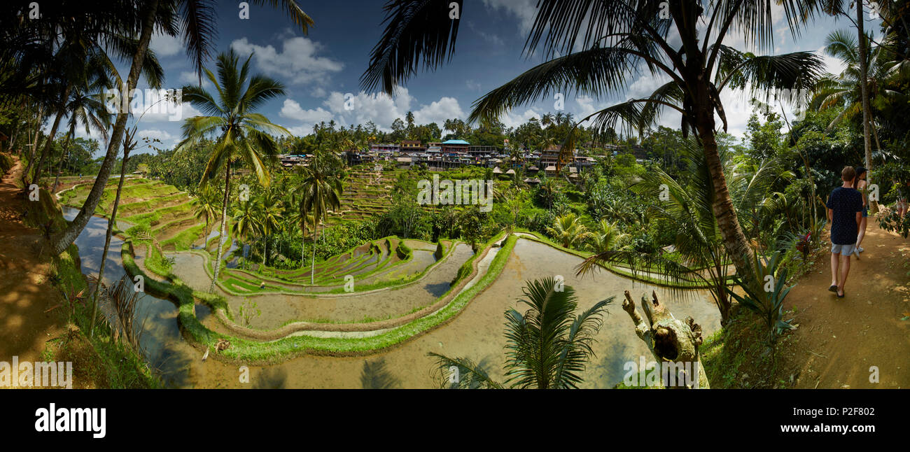 Rice terraces, Tegalallang, Bali, Indonesia - Stock Image