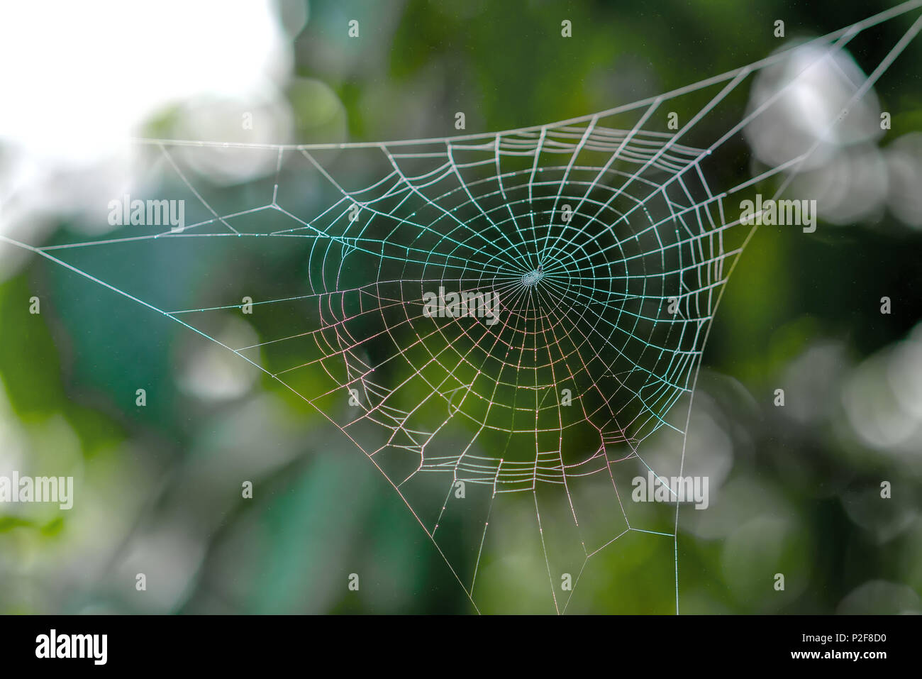 Beautiful spiderweb with dew drops on the silk rope the sunlight in the morning - Stock Image