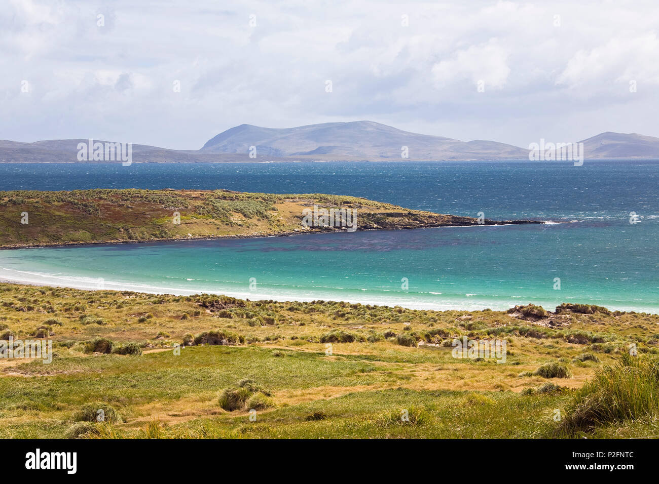Falkland Inseln, Malwinen, britisch, britisches ueberseegebiet, Suedamerika, Sued Atlantik - Stock Image