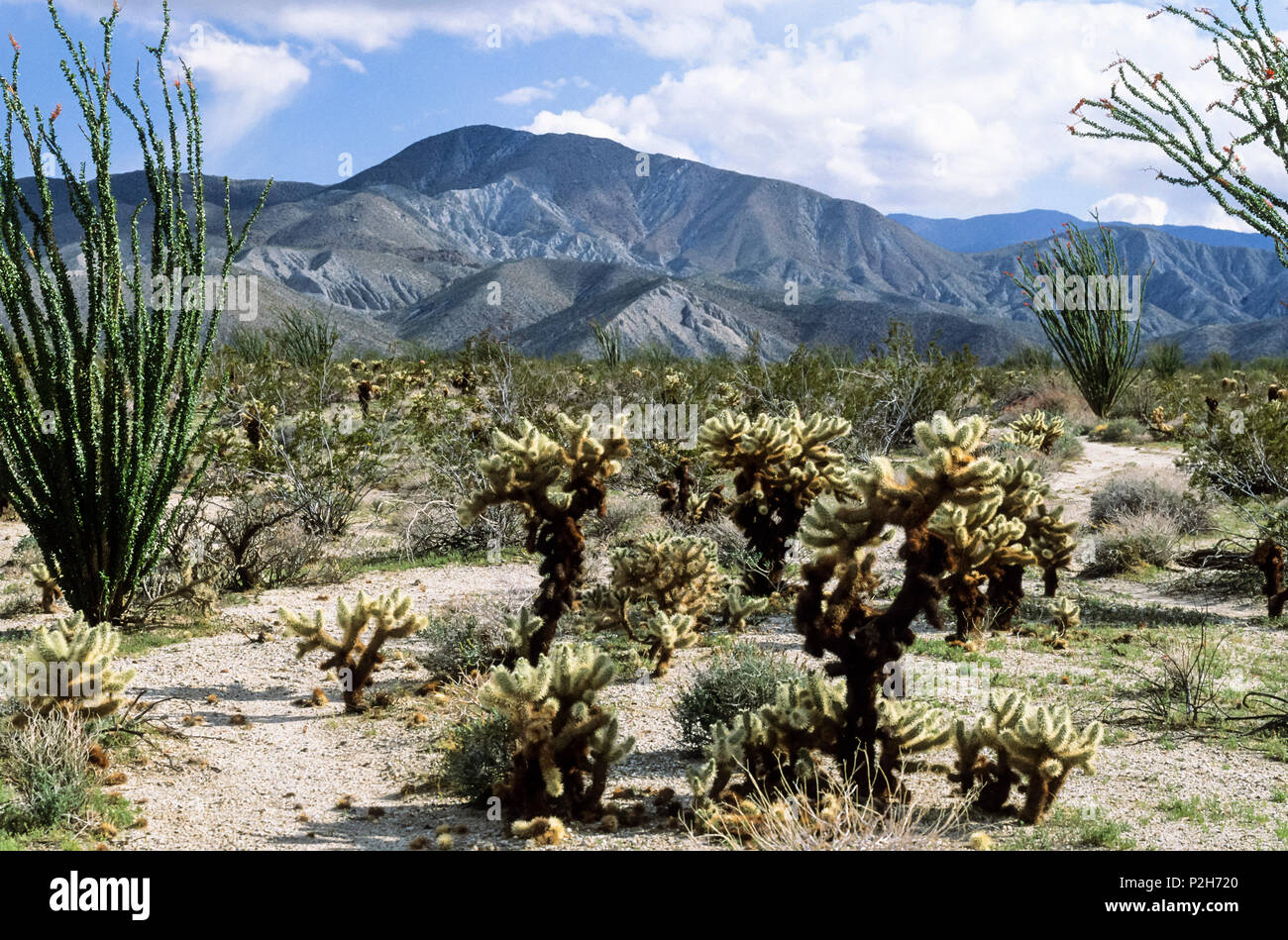 Anza-Borego Desert State Park, Kalifronien, USA - Stock Image