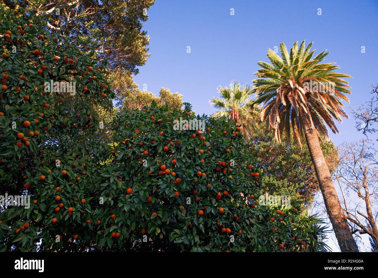 Jardines de Murillo in Barrio de Santa Cruz, Sevilla, Andalusia, Spain - Stock Image
