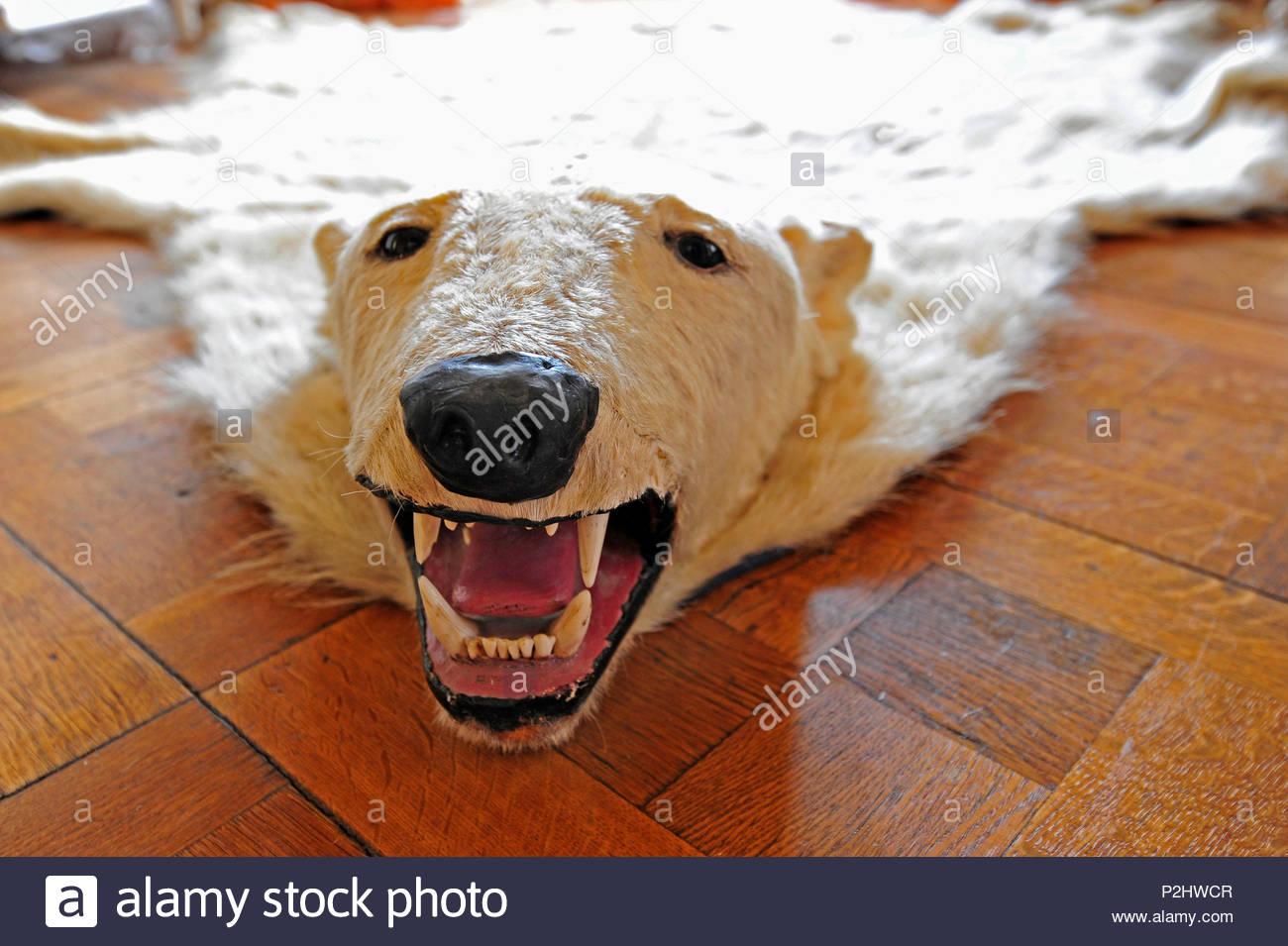 taxidermy bear red rug w american authentic black felt scranton product