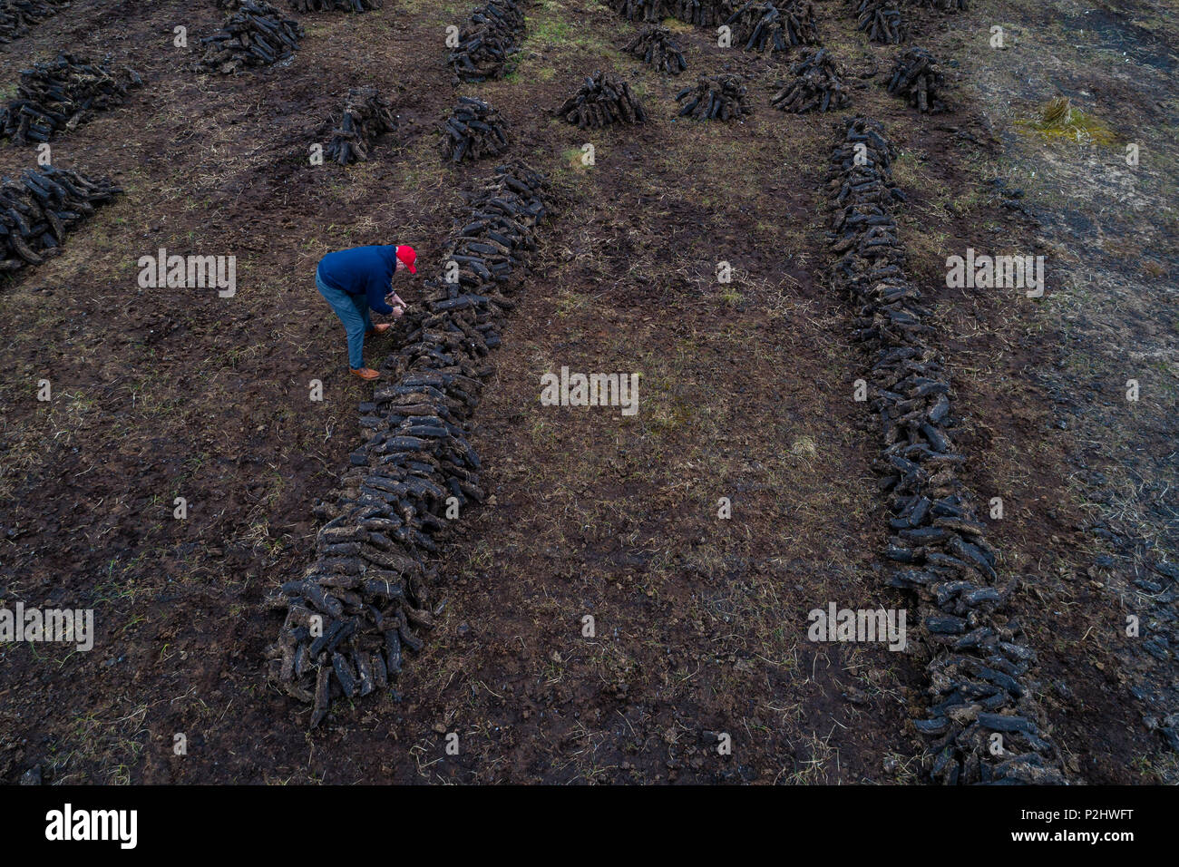 Man piling dry turf into rows at Peat Bog, Renard County Kerry Ireland - Stock Image