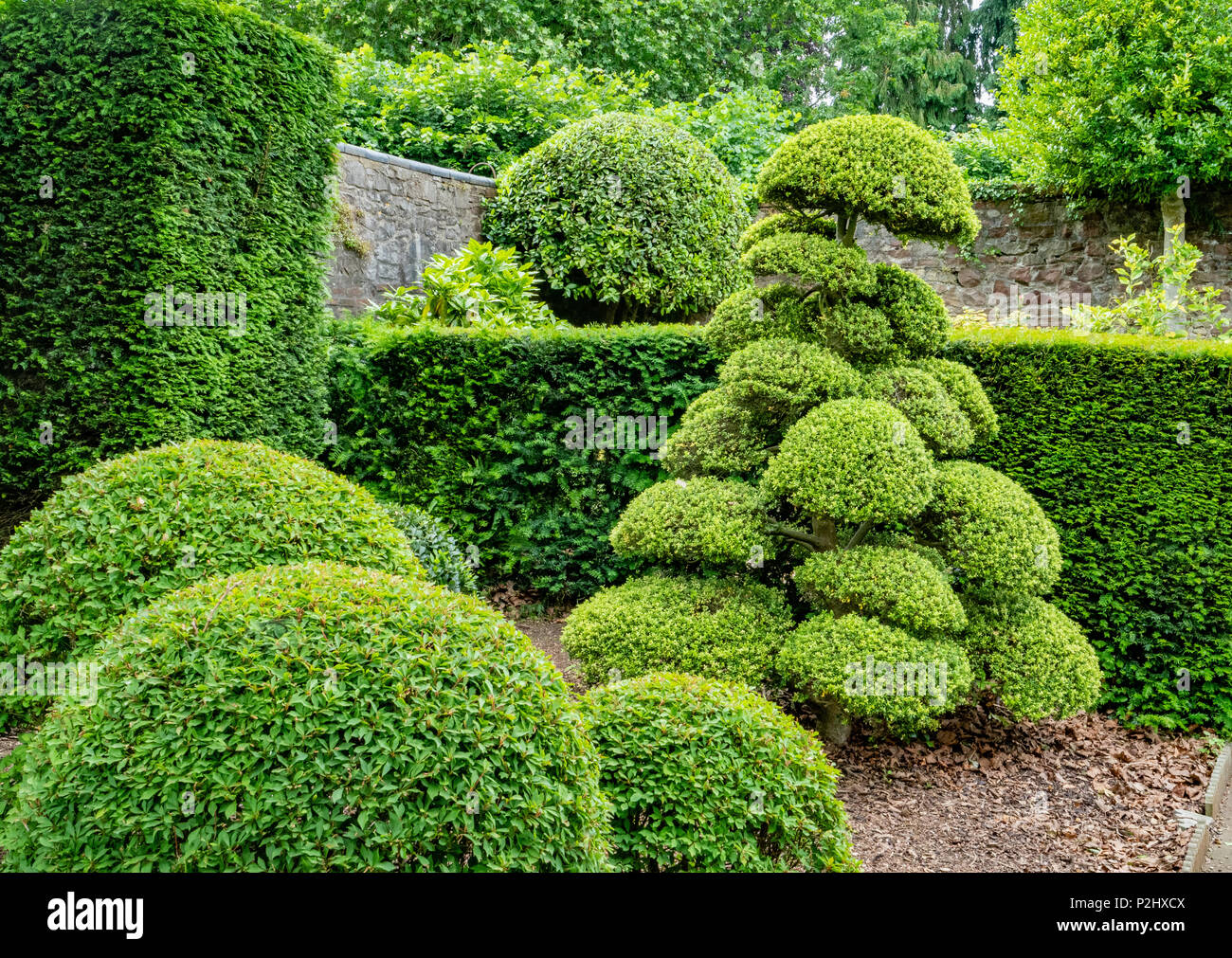 Clever use of sculptural topiary shapes in a domestic garden setting with clipped box and holly - Stock Image
